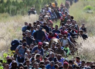 refugees Immigrants with Fake Passports Allowed by Immigration Official [Video]