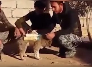 ISIS Uses Puppies to Carry Out Bombings [Video]