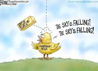 wacko birds economy Trump media