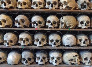 human remains skulls