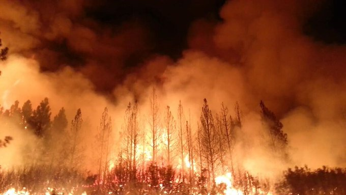 climate change arsonists
