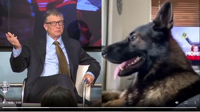 A Quick Tongue-In-Cheek Study Of Dog Behavior Versus Democrat Behavior — Which Of The Two Would Win? (Video) ⋆ Conservative Firing Line