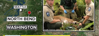 Fatal WA cougar attack: Are you on the Northwest menu?